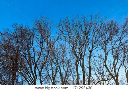 Dry branches against the backdrop of a calm sky. Isolated  dark branches