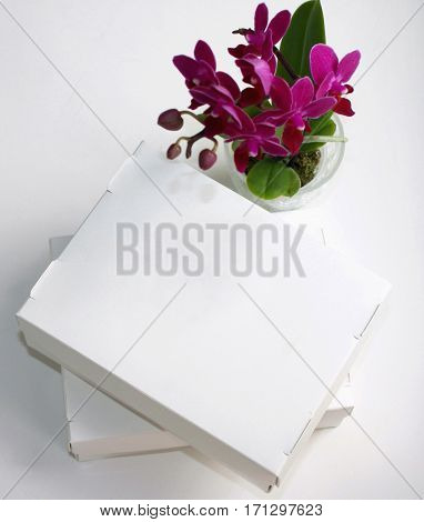 Two blank white carton boxes on white background next to purple orchid, top view.