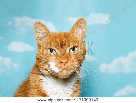 Portrait of one rumpled scruffy senior cat looking directly at viewer with bright yellow eyes. Blue background sky with clouds.