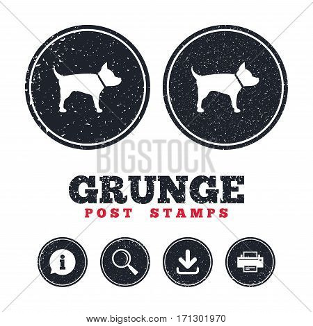 Grunge post stamps. Dog sign icon. Pets symbol. Information, download and printer signs. Aged texture web buttons. Vector