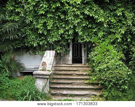 The entrance to an abandoned house overgrown with plants. Sukhumi, Abkhazia.