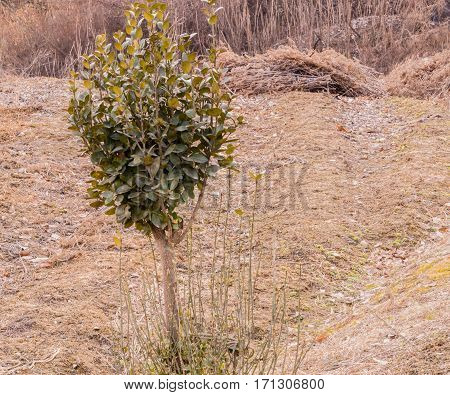 Young tree with green leaves in a clearing in a wooded area