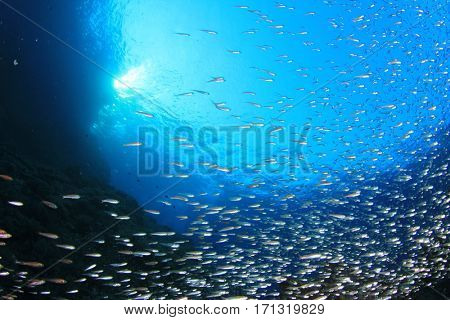 Underwater coral reef and fish in ocean