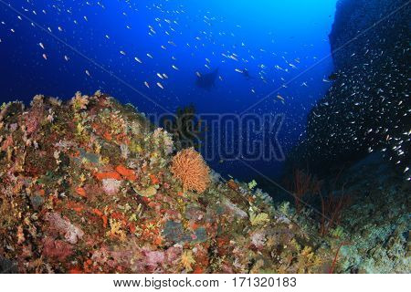 Coral reef underwater with manta ray swimming overhead