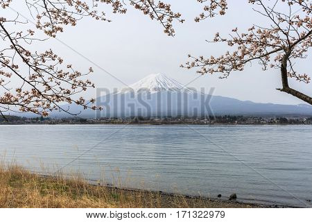 Mount fuji at Lake kawaguchiko in the morning. Sakura season in Japan.