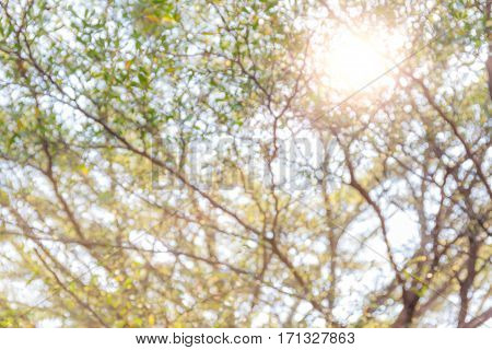 Abstract blurred photo of green natural foliage in Public park and sunlight in the background.