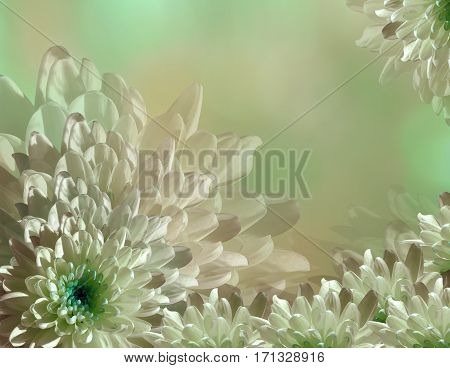 flower on blurry turquoise-green-pink background halftone. Blue-white flowers chrysanthemum. floral collage. Flower composition. Nature.