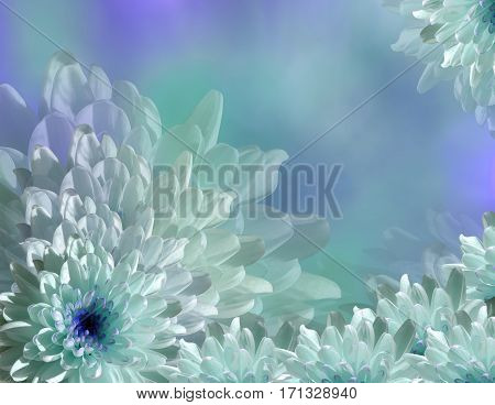 flower on blurry turquoise-blue background bokeh. Blue-white flowers chrysanthemum. floral collage. Flower composition. Nature.