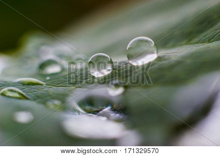 Macro raindrops on the leaf after the rain