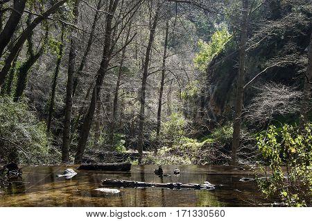 Forest and River, Santa Anita Canyon, CA