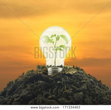 Light bulb with small green leaf plant inside on pile of soil over sunset sky Eco energy concept