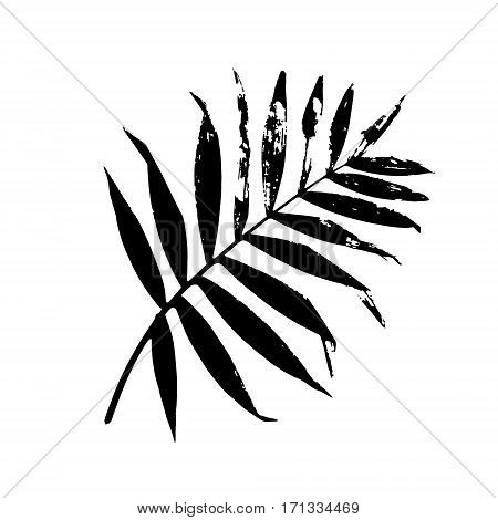 Palm leaf vector illustration. Black and white palm leaf silhouette. Isolated palm leaf.
