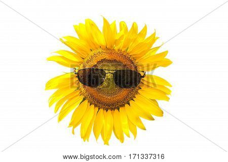 Smiling sunflower wearing black sunglasses isolated on white background.Saved with clipping path.