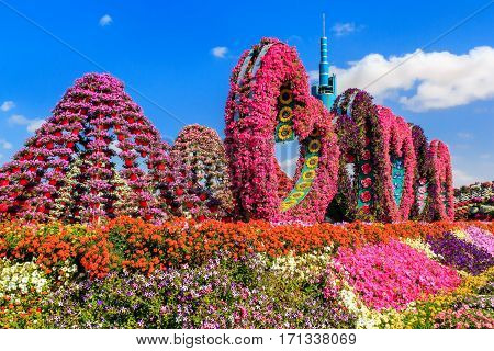Dubai, UAE - January 5, 2017.   Dubai Miracle Garden - Landscape flower arrangement in the form of heart and peaks. Dubai Miracle Garden is the largest natural flower garden in the world