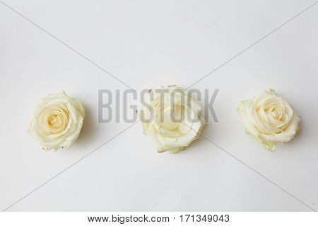 three white rosebuds