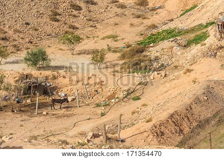 Outskirts of Berber village Tamezret at Gabes Governorate in the hot desert of Northern Africa in Tunisia