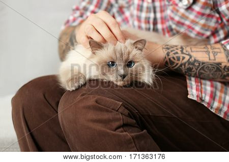 Cute fluffy cat lying on young man lap