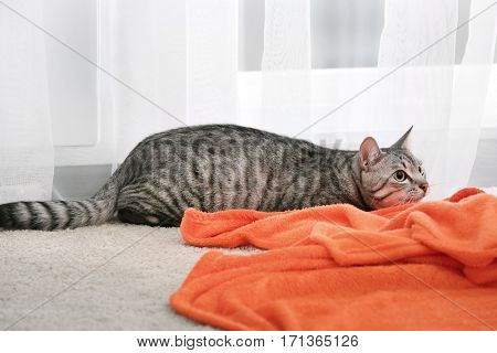 Cute funny cat with plaid at home