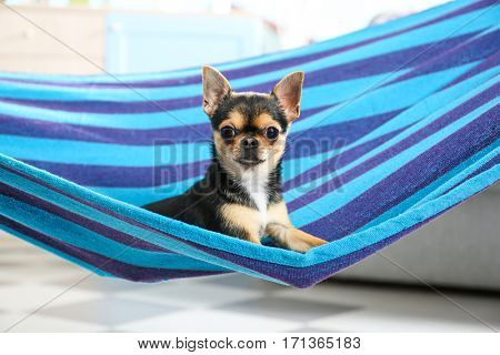 Cute puppy lying in blue hammock at home