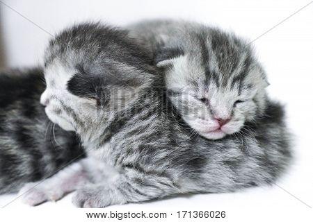 Kittens sleeping striped newborn eyes closed  baby cat