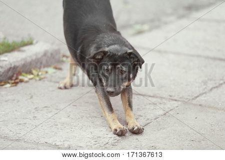 Stray dog walking outdoors
