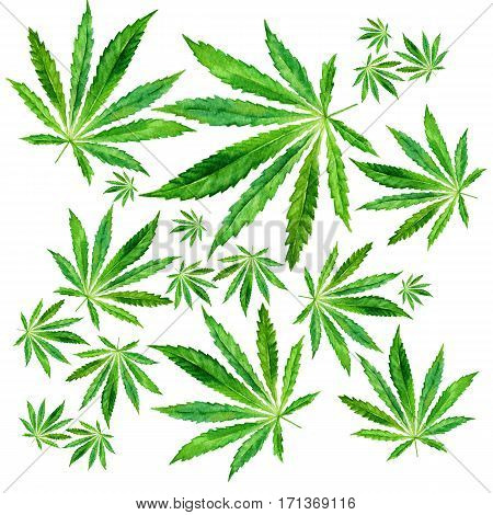 Cannabis leaves on white background. Hand drawn watercolor illustration of the plant Cannabis Sativa or Marijuana. Pattern with marijuana leaf for label poster web.