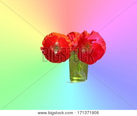 Poppy - the flower with many meanings around the world - three beautiful red poppies in a small green glass on a radiating pastel rainbow colored background ideal for a wall hanging and message