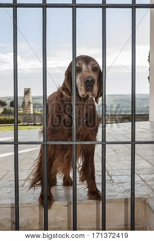 Dog behind bars in a habitation. Concept for the protection of animals