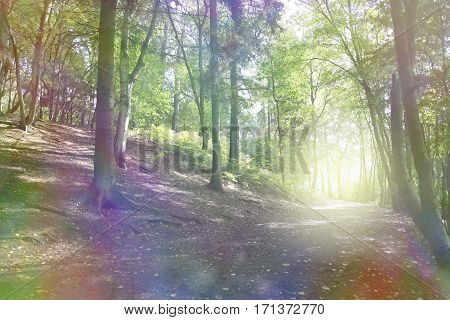 The Enchanted Forest - Beautiful bokeh effect sloping woodland scene with ethereal coloring and a bright light orb formation on right hand side on the horizon of the path
