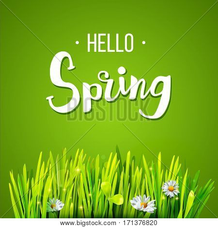 Hello Spring lettering with green grass and chamomile on green background. Spring background. Design for banners, greeting cards, spring sales. Vector illustration