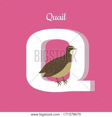 Animals alphabet. Letter - Q. Brown quail sits on letter. Alphabet learning chart with animal illustration for letter and animal name. Vector zoo alphabet with cartoon animal on pink background