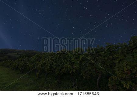 Night Vineyard Background. Night Starry Sky. Night Sky With Stars