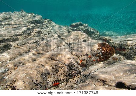 Rocky Sea Floor. Shallow Water, Ambient Light