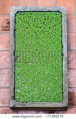 the duckweed float on water texture background