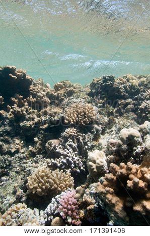 Coral garden beneath waves, color image, close up