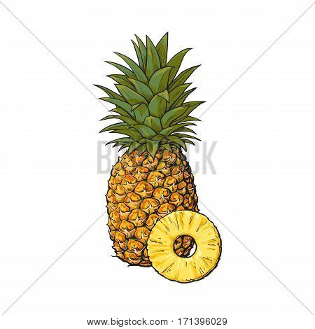 Whole, unpeeled, uncut, vertical pineapple and peeled round slice, sketch style vector illustration isolated on white background. Realistic hand drawing of whole and slice of fresh, ripe pineapple
