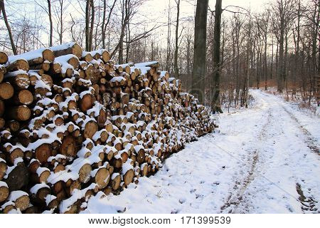 Firewood Stack of the lovely white-clad forest so cold