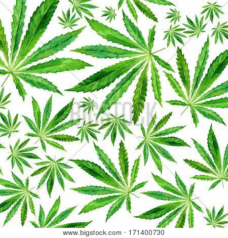 Crowd of Cannabis leaves on white background. Hand drawn watercolor illustration of the plant Cannabis Sativa or Marijuana. Pattern with marijuana leaf for label poster web.
