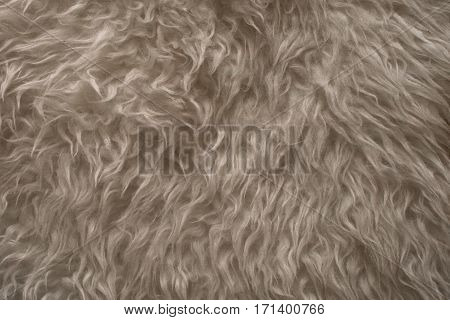 White fur texture. Close up view of abstract fur background. Natural white fur background. Animal hair. Abstract texture and background for designers. White wool texture.