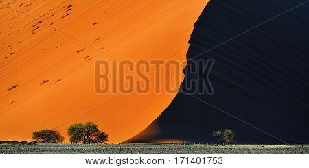 Beautiful landscape with dune 40 and trees at sunrise Sossusvlei Namib Naukluft National Park Namibia