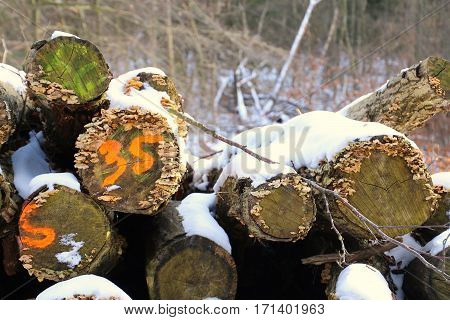 Firewood Stack number thirty five in orange