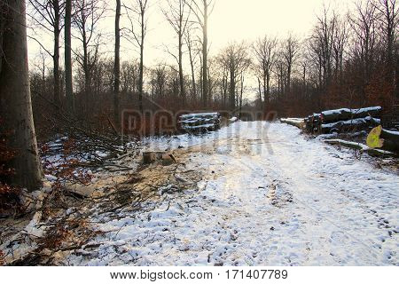 Dirty snow after logging in February in th forest