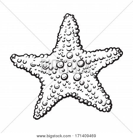 Hand drawn starfish, underwater living organism, sketch style black and white vector illustration isolated on white background.