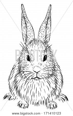 Hand-drawn sketch of rabbit isolated on white