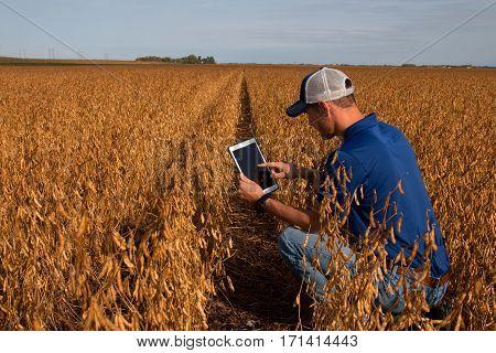 Farmer Inspecting Soybean Field