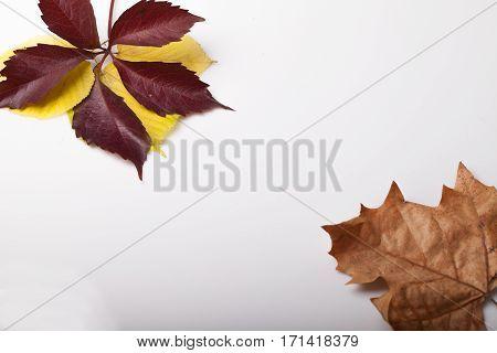 fallen leaves in autumn origin on the table