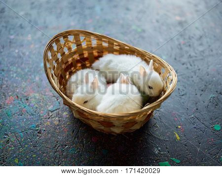 Traditional white Easter rabbits in the basket