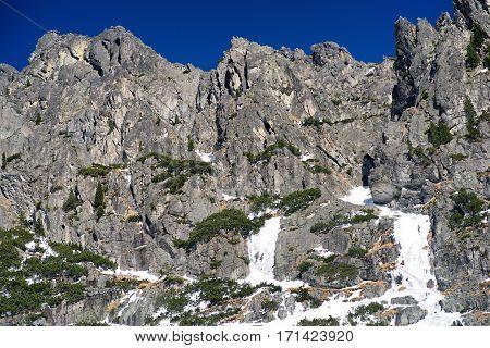 Creeping pine on snowy peaks of High Tatras mountains Slovakia