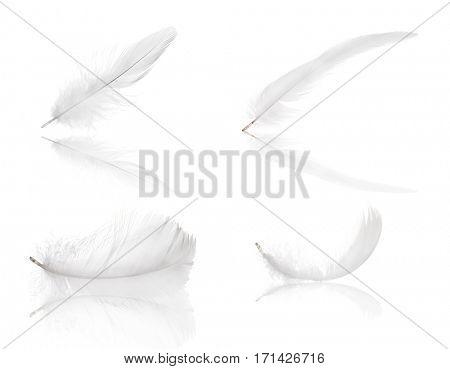 set of feather isolated on white background