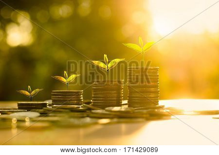 Money growing concept Business success conceptTrees growing on pile of coins money over sun flare silhouette style